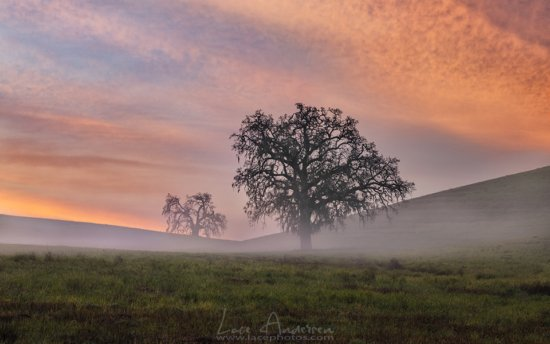 Tree photography example of an isolated subject in morning fog