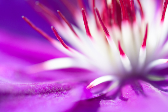 Macro Flower Photography composition by Jaymes Dempsey