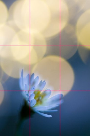 Grid lines to demonstrate the rule of thirds example with a macro photography composition.