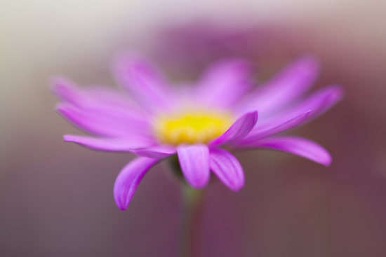 Example of breaking the rule of the thirds to perverse symmetry for your macro photos.