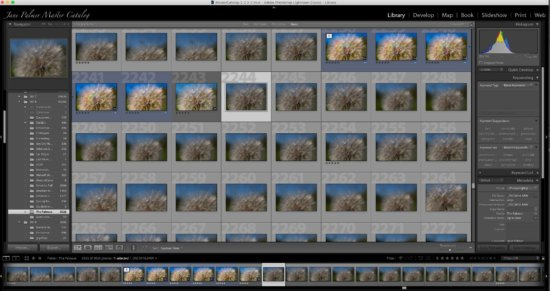 Multiple macro photos captured with Lensbaby Velvet 56 by Jane Palmer