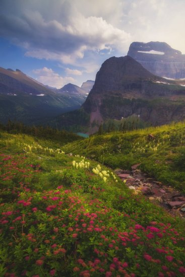 Landscape Image of wildflowers in Glacier National Park.