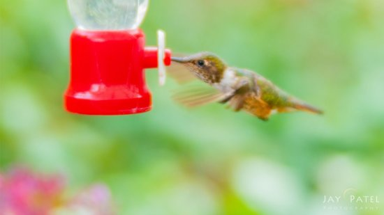 Creative Photograph of Hummingbird with Lensbaby Velvet 85 by Jay Patel