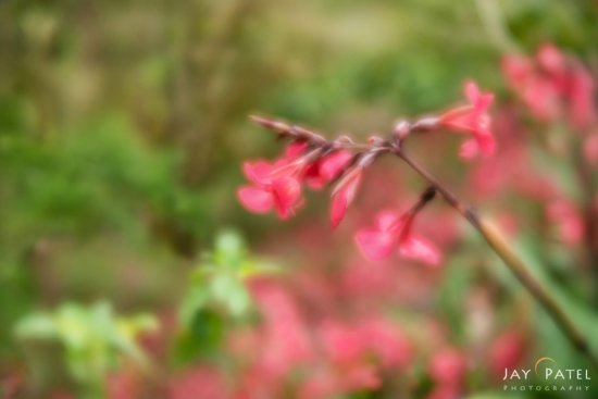 Impressionistic landscapes photography with Lensbaby's Velvet 56 by Jay Patel