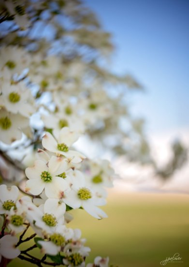 Landscape photography with Lensbaby Twist 60 using Auto ISO setting by Jane Palmer.