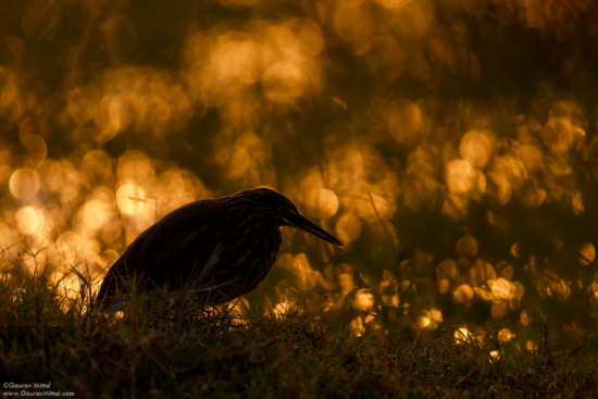 Bird Photo by Gaurav Mittal with Canon IDX.