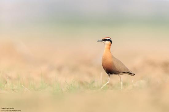 Birds photo captured with a beanbag by Gaurav Mittal