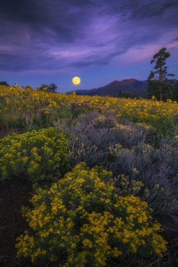 Nature photography at twilight over summer wildflowers in Arizona.