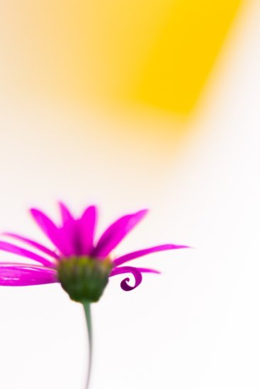 Soft focus macro photography in soft overcast light by Jaymes Dempsey