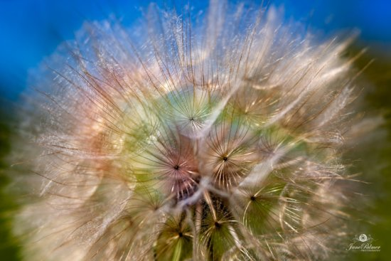 Final handheld macro photo with selective focus captured by Jane Pamer