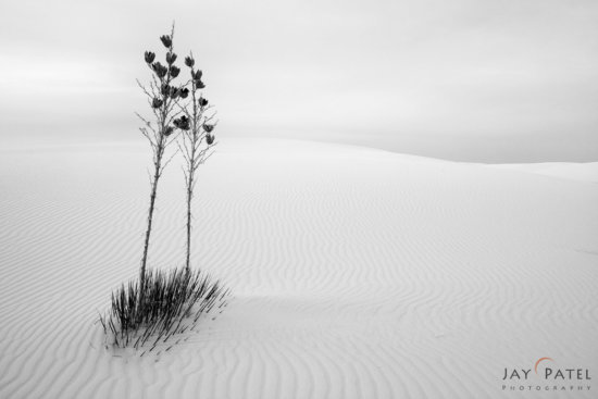 High key black and white landscape photo in soft light, White Sands National Park, New Mexico by Jay Patel