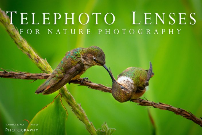 Telephoto Lenses for Nature Photography Cover by Varina Patel
