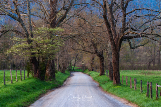 Landscape photography from Sparks Lane in Cades Cove by Chrissy Donadi