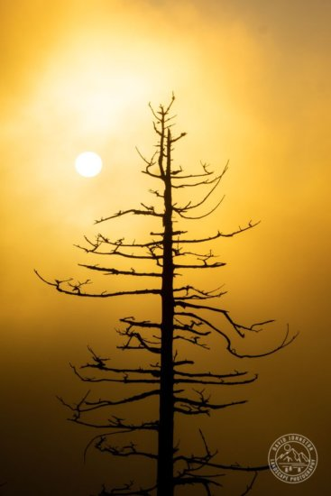 Nature Photography by David Johnston - After making global adjustments in Lightroom