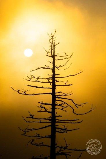 Final nature image after making global & local adjustments in Lightroom by David Johnston