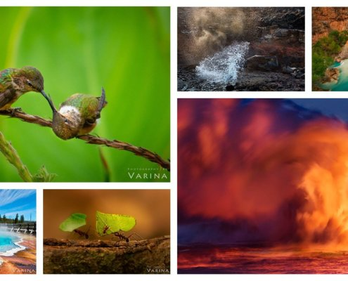 Nature Photography by Jay & Varina Patel