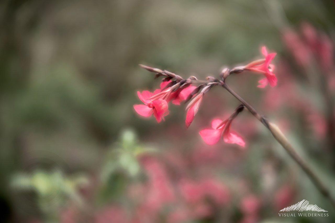 Creative nature photography tutorial case study photo