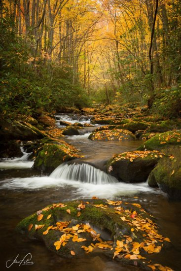Nature photography from middle Prong of the Little River, GSMNP by Jane Palmer