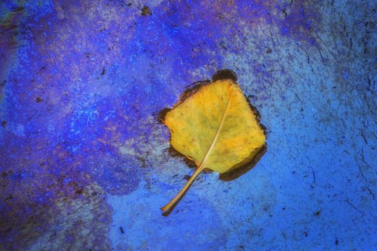 Intimate landscape photography of a Lone leaf on oil slicks in Zion National Park, UT by Peter Coskun