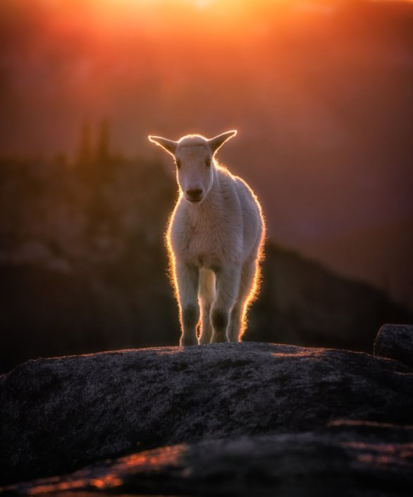 Wildlife Photography during Golden Hours