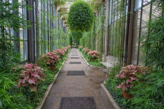 A view inside Longwoord Gardens by Anne Belmont