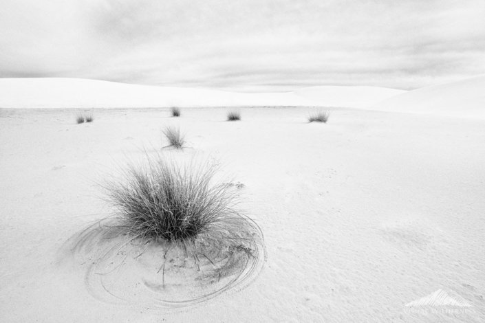White Sands National Park, New Mexico - Black and White Photography in Silver Efex Pro by Kate Silvia