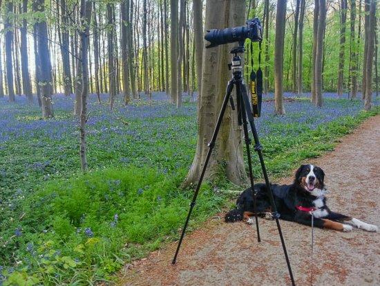 Bear the super-sidekick guard dog watching over Chrissy Donadi'd tripod & camera.
