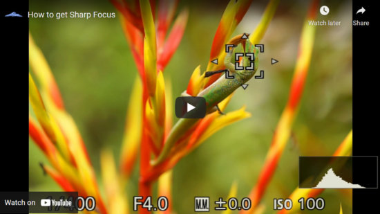 Cover for Video about focus setting for nature photography by Jay Patel.