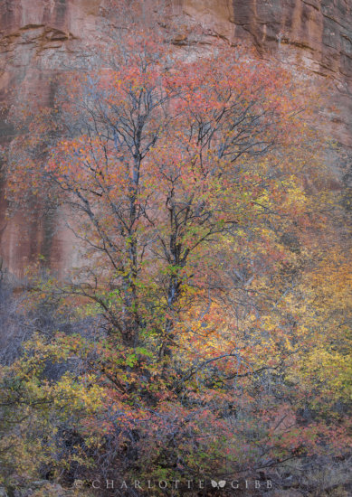 ETTR Landscape Photography Example by Charlotte Gibb