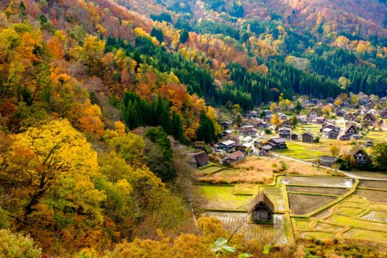 Photographing fall colors in Shirakawago, Japan