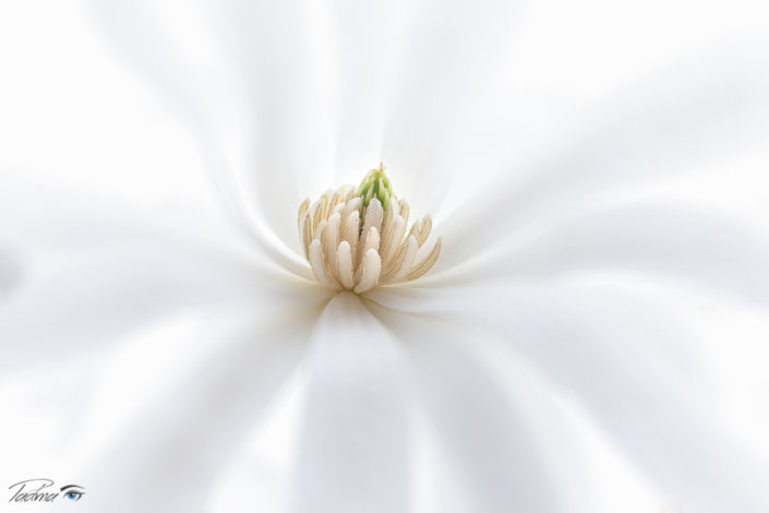 Macro Flower Photography with Magnolia