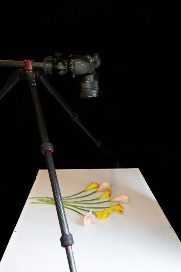 Behind the scene setup for back lit flower photography