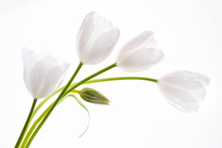 Flower photography composition by Padma Inguva