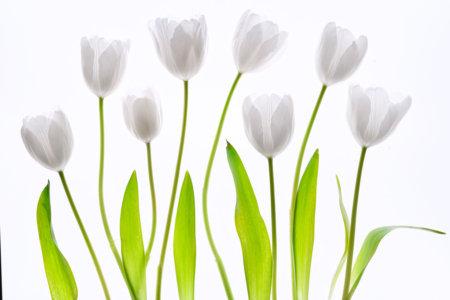 Progressive flower photography by Padma Inguva