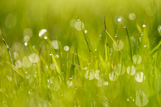 Back lit water drops on grass
