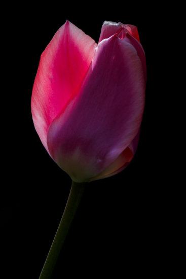 Blacklight Flower Photography from Botanical Gardens