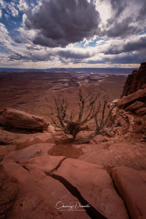 Canyonlands National Park Landscape Photography by Chrissy Donadi