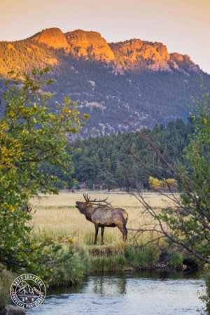 Story telling with wildlife photos in Rocky Mountain National Park by David Johnston