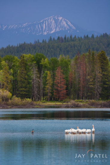 Landscape photography with wildlife in Grand Tetons by Jay Patel