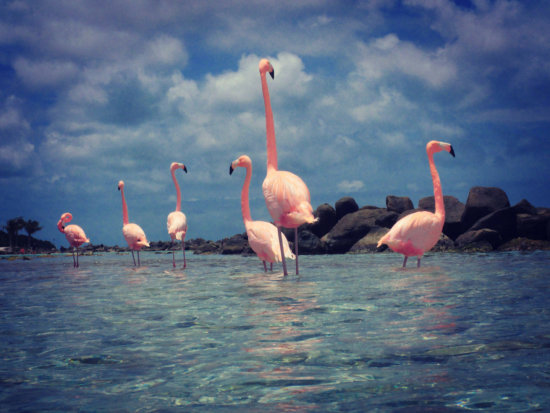 Fine art print of pink flamingos by Peter Dulis