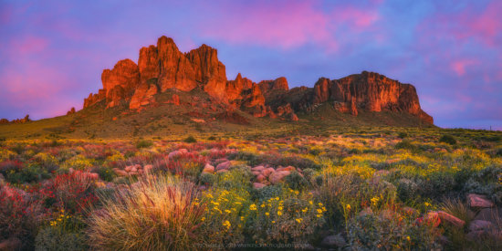 Wildflowers in iconic landscape photography location of Superstition Mountains, Arizona by Peter Coskun.