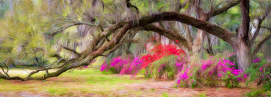 Adding artistic effects using Photoshop and Plugin to Nature Photography by Kate Silvia
