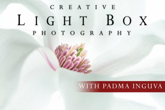Creative Light Box Photography Online Class
