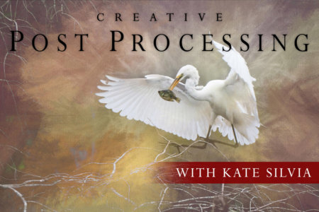 Creative Post Processing Online Class