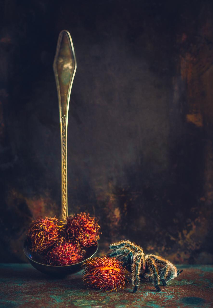 Creative Still Life Photography by Alan Shapiro