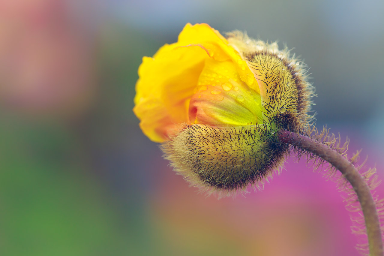 Flower Photography by Alan Shapiro