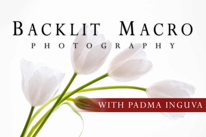 Cover Image for Blacklit Macro Photography Class with Padma Inguva