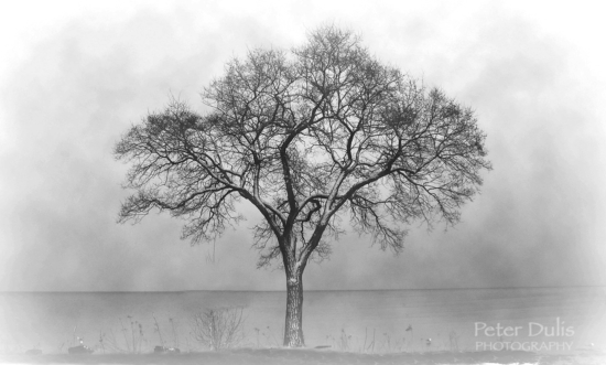 Fine Art Black & White Photography by Peter Dulis