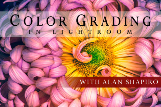 Color Grading in Lightroom Online Class Cover by Alan Shapiro