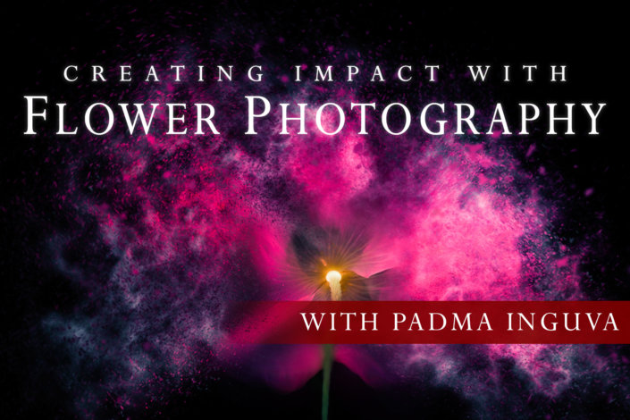 Creating Impact with Flower Photography with Padma Inguva